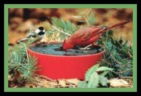 alt Birdbath Heated 1
