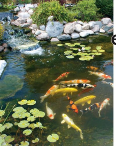 Plants and fish for Garden pond depth
